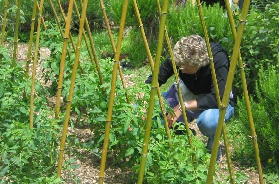 Gplcommunication blog archive voglia di orto for Trapianto pomodori